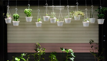 Spice Plants In Pots Hanging In Front Of Garage.