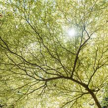 Sunshine Pass Through Spring Tree