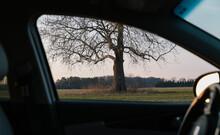Tree Seen  Through Car Window
