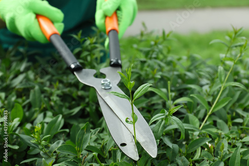 Canvas Worker cutting bush with hedge shears outdoors, closeup