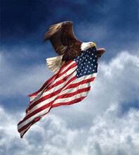 American Eagle Flying With United States Flag | 18 X 20 Illustration