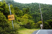 The Slow Pace On St. John, U. S. Virgin Islands, West Indies