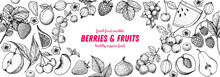 Berries And Fruits Drawing Collection. Hand Drawn Berry Sketch. Vector Illustration. Set Of Various Fruits And Berries