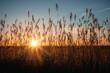 Abendstimmung im Sonnenuntergang über dem Feld