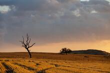 Rural Scene At Sunset