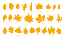 Big Set Of Vector Autumn Leaves, Herbal Element. Collection Of Fall Simple Orange Leaves. Can Be Used As Isolated Sign, Symbol And Icon. Collection Of Autumn Botanical Vector Flat Plant Illustration