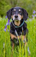 Cute Huntaway Breed Dog Posing In The Scenic Mea