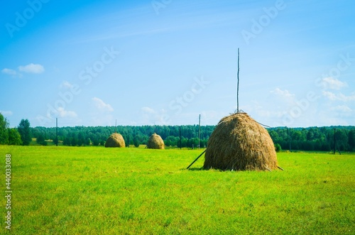 Tablou Canvas Harvesting grass for livestock, haystack
