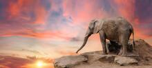 Elefant Auf Felsen Bei Sonnenuntergang