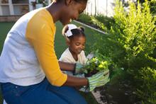 Happy African American Mother And Daughter Kneeling Tending To Plants In Sunny Garden
