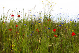 Fototapeta Kwiaty - łąka, kwiaty polne, mak, maki, rzepak, krajobraz łąki, lato , wiosna, przyroda, zieleń,