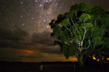 Gum Tree In Front Of Stars Rising Above Clouds Horizontal