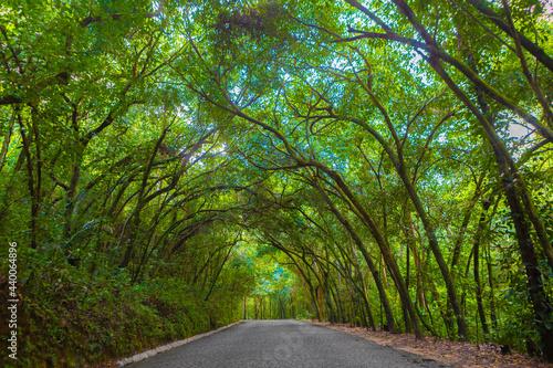 Strada forestale in un parco del brasile