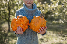 Boy In A Knitted Blue Sweater Is Holding In His Hands Ugly Orange Pumpkin. Deformed Orange Pumpkin With A Damaged, Ugly Skin. Thanksgiving, Harvest, Halloween Concept.