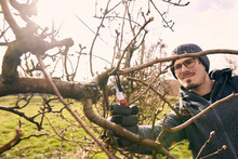 Farmer Cutting Branch Of Bare Tree With Pruning Shears At Organic Farm