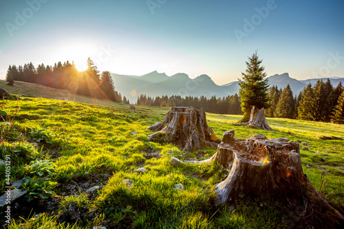 Tree stumps illuminated by setting sun