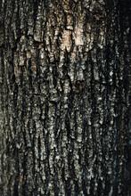Tree Bark Textured Background
