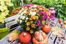 Autumn Harvest Including Bouquet Of Blooming Chrysanthemums, Chestnuts, Apples, Pumpkin, Squashes And Grape Leaves