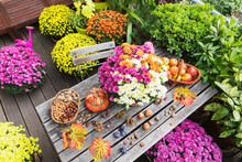 Balcony Table With Autumn Harvest Including Bouquet Of Blooming Chrysanthemums, Various Nuts, Apples, Pumpkin, Plums And Grape Leaves With Potted Flowers In Background