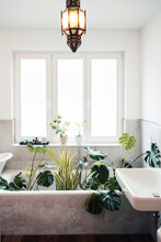 Home Decor With Plant And Pendant Light