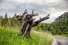 Spooky Tree Trunk On Grass In Province Of Brescia, Lombardy, Italy