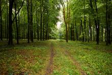 The Way Forward Toward Forest