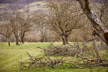 Bare Fruit Trees At Organic Orchard