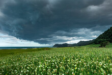 Gray Storm Clouds Over Vast Green Meadow