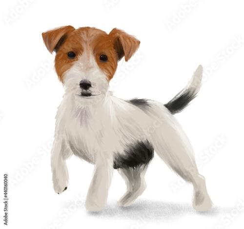 Fotografie, Obraz Jack Russel Terrier Illustration
