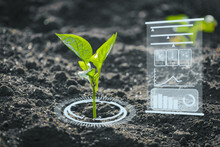 Agriculture And Artificial Intelligence Technology In Smart Farm For Monitoring Seed And Plants. Smart Farming Ai And Precision Agriculture