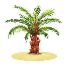 Palm Tree, Hand Painted , Stylized And Isolated On A White Background