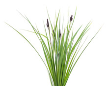 Bunch Of Green Sedge With Flower.