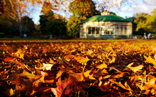 Botanical Gardens With Bed Of Autumn Leaves In Foreground