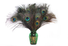 Vase Of Peacock Feathers On Light Background Vintage Green Vase
