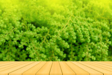 Green Grass And Wooden Table
