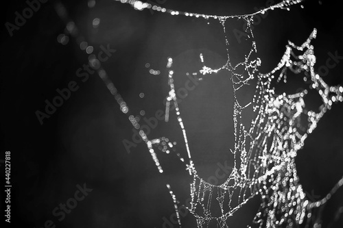Tela spider web threads with dew drops