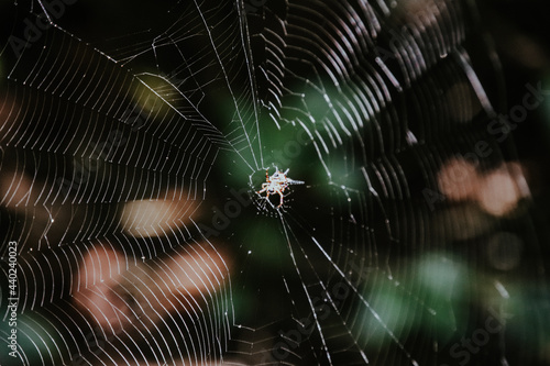 Fotografie, Obraz Shallow focus shot of a large, round spiderweb with a spider in the middle