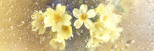 Spring Flowers Forget Me Nots And Primroses Close Up On A Golden Background Behind Glass With Raindrops