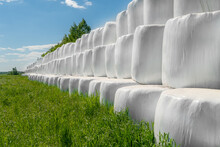 Country Field With Bales Of Hay Wrapped In Plastic Bags On A Sunny Day Against A Blue Sky