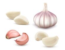 Garlic Set. Whole And Peeled Cloves. Realistic Vector Illustration Isolated On White Background.