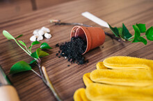 Flowerpot With Spilled Soil And Twigs On Table