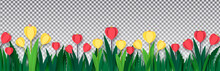 Red And Yellow Crocuses In The Grass On Isolated On A Transparent Background. Paper Style. Template For Banner, Poster, Presentation. Vector