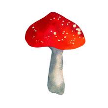 Watercolor Amanita Mushrooms. Isolated On White Backgrounds. Botanical Illustration.