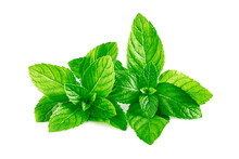 Mint Leaves, Mint Leaves Isolated On White Background