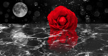 Red Rose And Moon In The Night Reflected In The Water With Bokeh Background