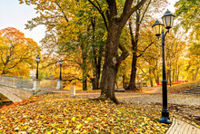 Golden Colors Of Autumn In A Public Domain Park, Europa, Latvia, Riga