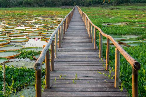 Valokuva Brazilian Panantal, Victoria Regia plant and wooden footbridge