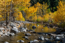 Fall In An Eastern Sierras River, Featuring Reflection Of Foliage On Lake, And Rocks