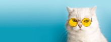 Funny Cat In Sunglasses. Cat With Glasses On A Light Blue Clean Sunny Background. Funny Pets, Party, Vacation, Travel, Summer Concept.