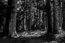 Chemin Forestier éclairé Par Les Rayons Du Soleil